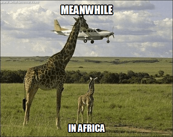 Terrestrial animal - www.whatsmeme.com MEANWHILE St-8s INAFRICA