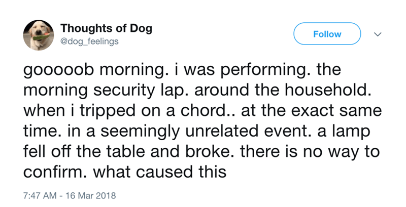 dog - Text - Thoughts of Dog @dog_feelings Follow gooooob morning. i was performing. the morning security lap. around the household. when i tripped on a chord.. at the exact same time. in a seemingly unrelated event. a lamp fell off the table and broke. there is no way to confirm. what caused this 7:47 AM 16 Mar 2018
