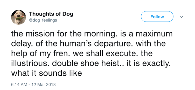 dog - Text - Thoughts of Dog @dog_feelings Follow the mission for the morning. is a maximum delay. of the human's departure. with the help of my fren. we shall execute. the illustrious. double shoe heist.. it is exactly. what it sounds like 6:14 AM 12 Mar 2018