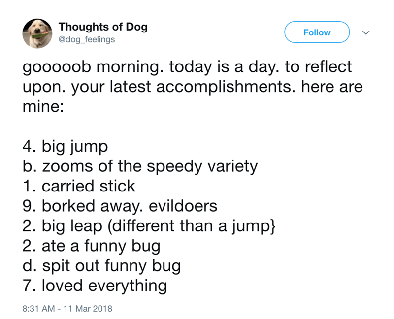 dog - Text - Thoughts of Dog @dog_feelings Follow gooooob morning. today is a day. to reflect upon. your latest accomplishments. here are mine: 4. big jump b. zooms of the speedy variety 1. carried stick 9. borked away. evildoers 2. big leap (different than a jump 2. ate a funny bug d. spit out funny bug 7. loved everything 8:31 AM 11 Mar 2018