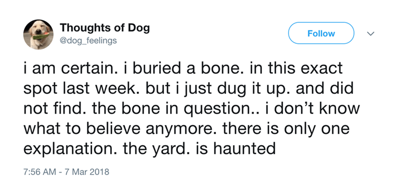 dog - Text - Thoughts of Dog @dog_feelings Follow i am certain. i buried a bone. in this exact spot last week. but i just dug it up. and did not find. the bone in question.. i don't know what to believe anymore. there is only one explanation. the yard. is haunted 7:56 AM 7 Mar 2018