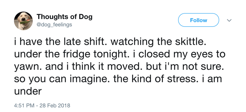 dog - Text - Thoughts of Dog @dog_feelings Follow i have the late shift. watching the skittle. under the fridge tonight. i closed my eyes to yawn. and i think it moved. but i'm not sure. so you can imagine. the kind of stress. i am under 4:51 PM 28 Feb 2018