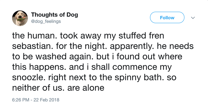 dog - Text - Thoughts of Dog @dog_feelings Follow the human. took away my stuffed fren sebastian. for the night. apparently. he needs to be washed again. but i found out where this happens. and i shall commence my snoozle. right next to the spinny bath. so neither of us. are alone 6:26 PM -22 Feb 2018
