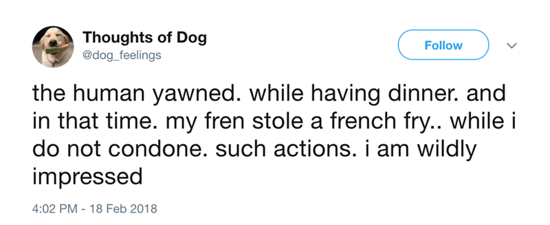 dog - Text - Thoughts of Dog @dog_feelings Follow the human yawned. while having dinner. and in that time. my fren stole a french fry.. while i do not condone. such actions. i am wildly impressed 4:02 PM 18 Feb 2018