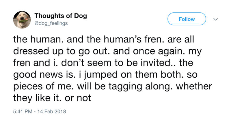 dog - Text - Thoughts of Dog Follow @dog_feelings the human. and the human's fren. are all dressed up to go out. and once again. my fren and i. don't seem to be invited.. the good news is. i jumped on them both. so pieces of me. will be tagging along. whether they like it. or not 5:41 PM 14 Feb 2018