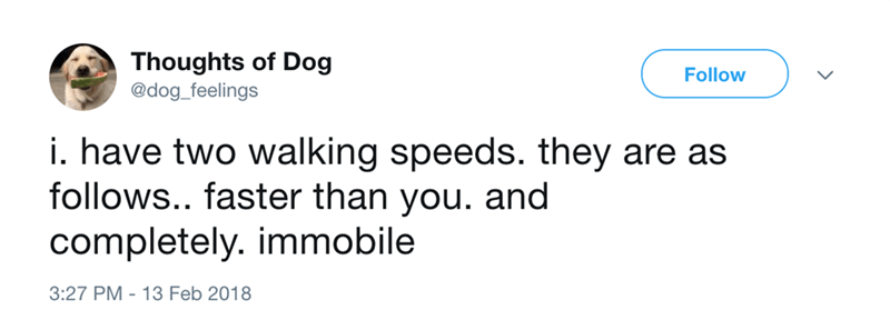 dog - Text - Thoughts of Dog @dog_feelings Follow i. have two walking speeds. they are as follows.. faster than you. and completely. immobile 3:27 PM 13 Feb 2018