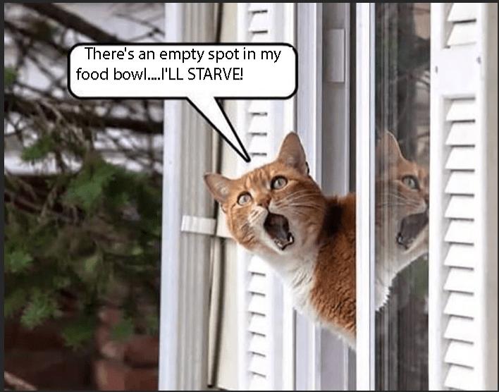 Cat - There's an empty spot in my food bowl...LL STARVE! LLLLLELLLLLL LLLLL