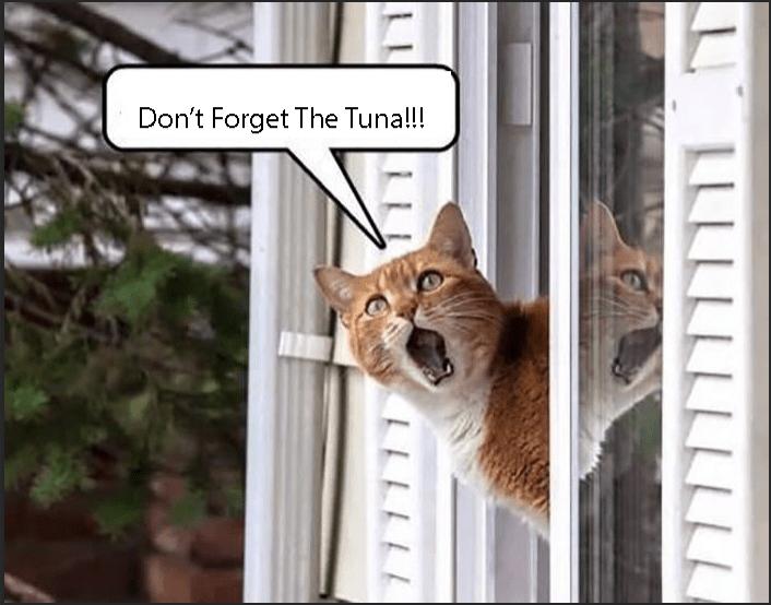 Cat - Don't Forget The Tuna!!! LLLLLLLLLLL LLLLLL