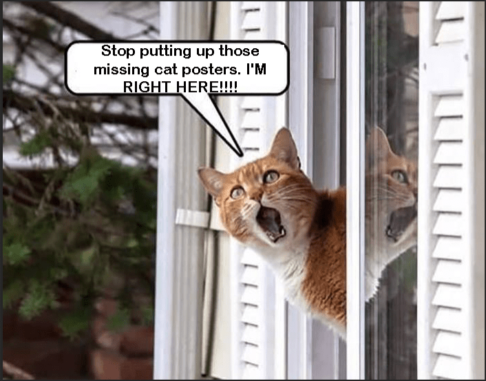 Cat - Stop putting up those missing cat posters. I'M RIGHT HERE! LLLLLELLLLLL LLLLLL
