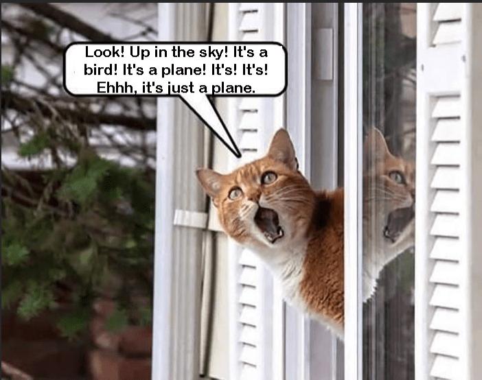 Cat - Look! Up in the sky! It's a bird! It's a plane! It's! It's! Ehhh, it's just a plane. LLLLLLLLLLLL LLLLLL