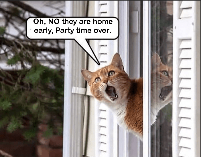 Cat - Oh, NO they are home early, Party time over. LLLL LLLL