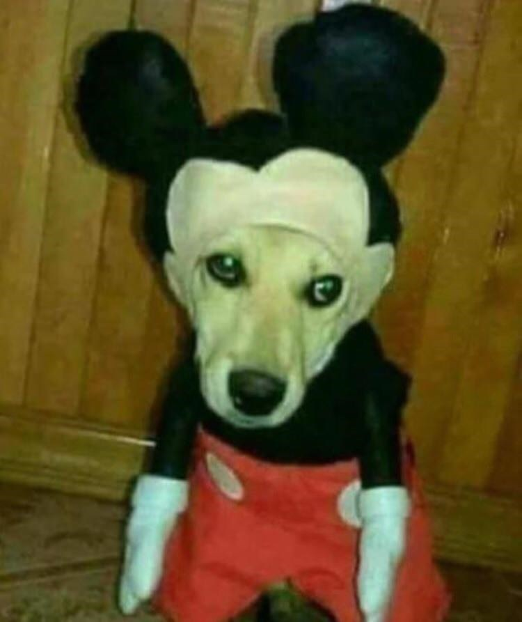 cursed image of a mickey mouse dog