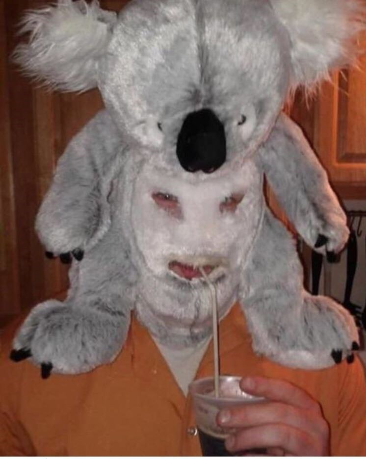 cursed image of a Koala mask on someone's face