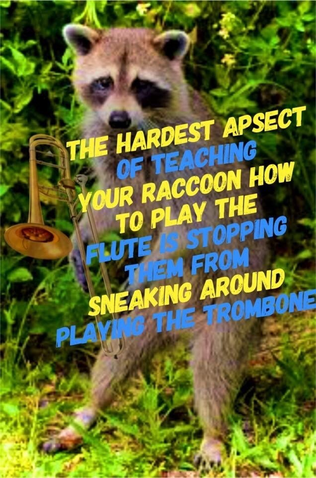 Funny meme about raccoons.