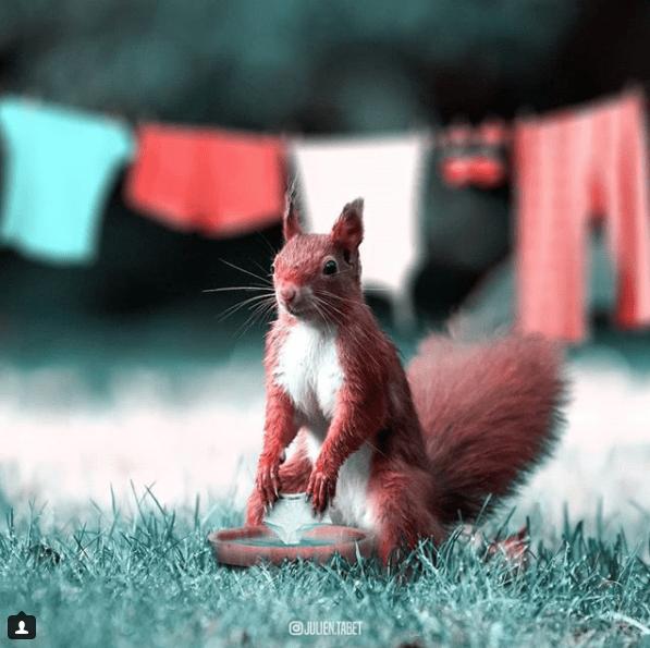 Squirrel - OJULENTABET