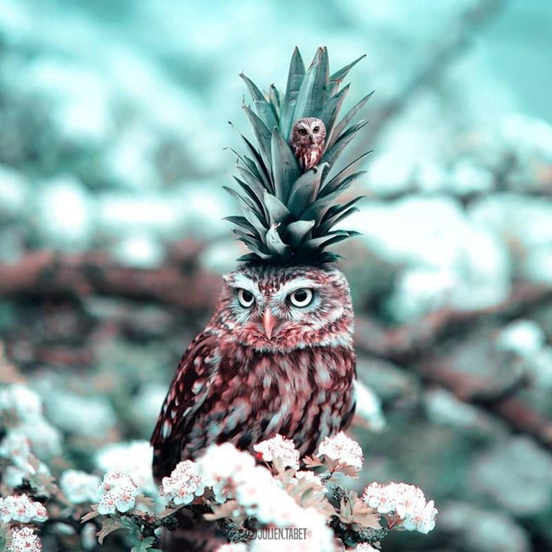 Bird - JULIEN.TABET