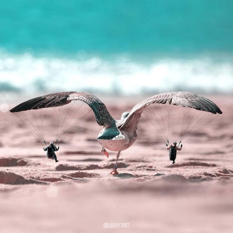 Bird - @JULIENTABET