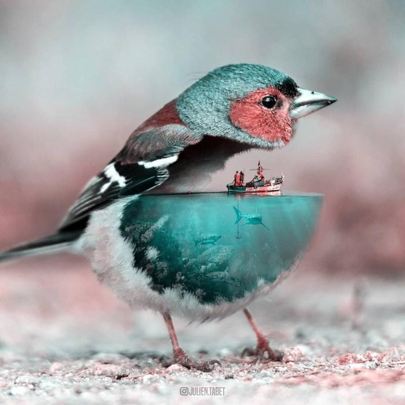 Bird - OJULIEN TABET