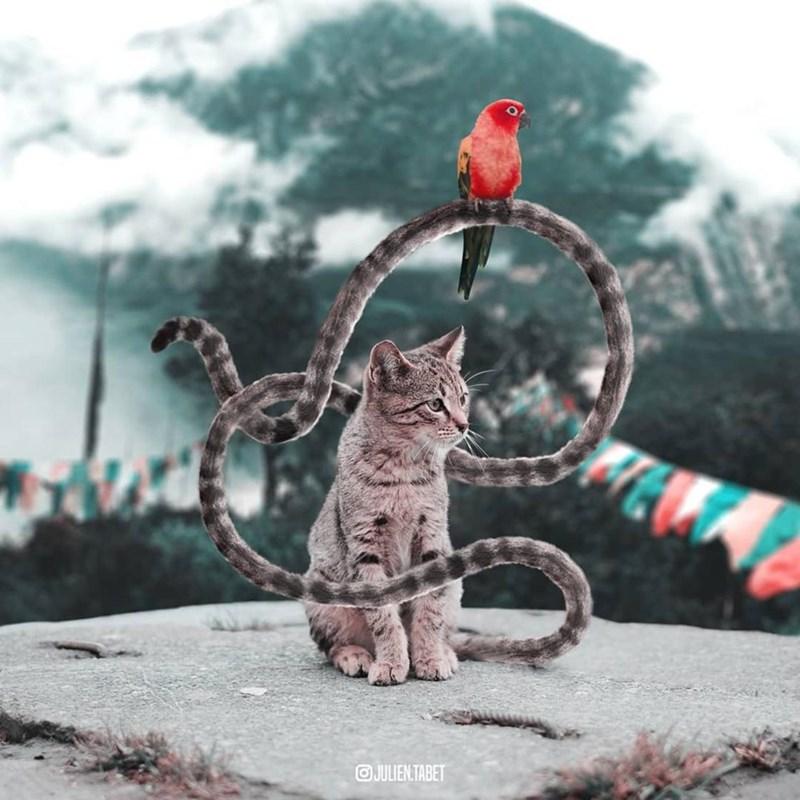 Cat - aJULIEN.TABET