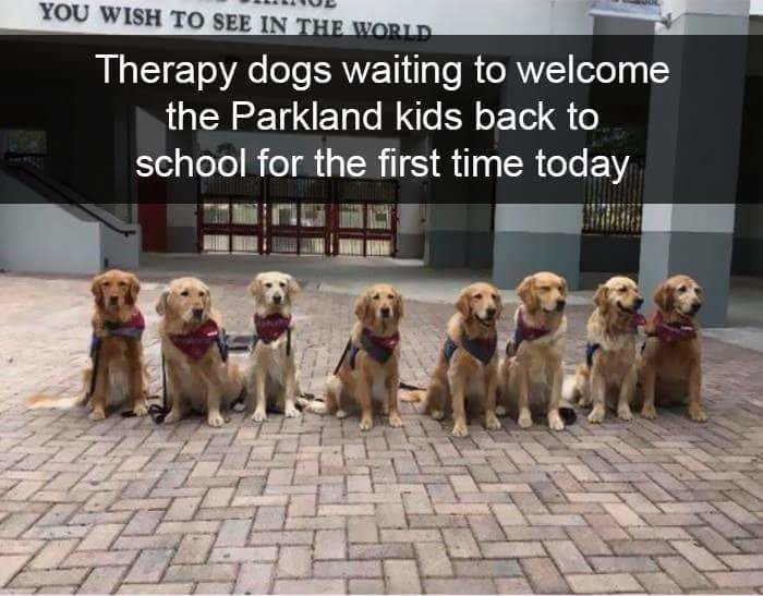 Vertebrate - YOU WISH TO SEE IN THE WORLD Therapy dogs waiting to welcome the Parkland kids back to school for the first time today