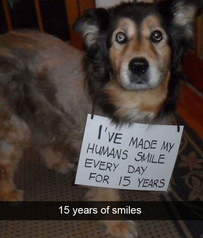 Dog - I'VE MADE MY HUMANS SMILE EVERY DAY FOR 15 YEARS 15 years of smiles