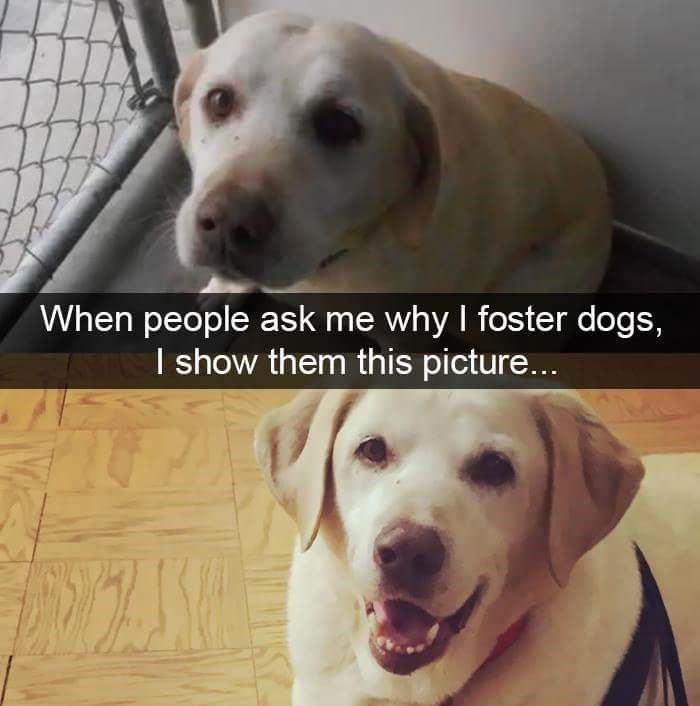 Dog - When people ask me why I foster dogs, I show them this picture...