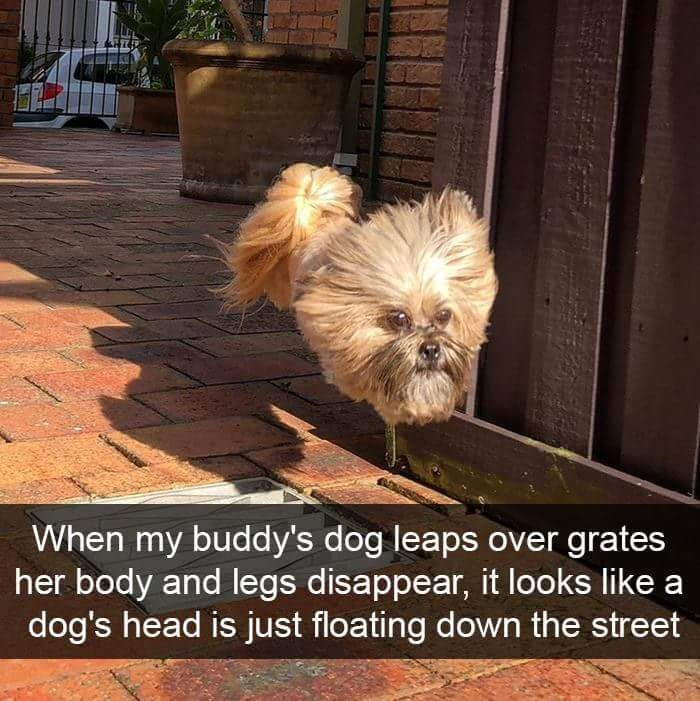 Dog - When my buddy's dog leaps over grates her body and legs disappear, it looks like a dog's head is just floating down the street