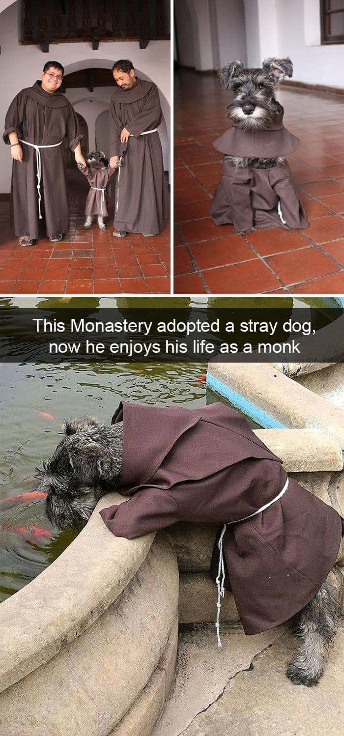Outerwear - This Monastery adopted a stray dog now he enjoys his life as a monk