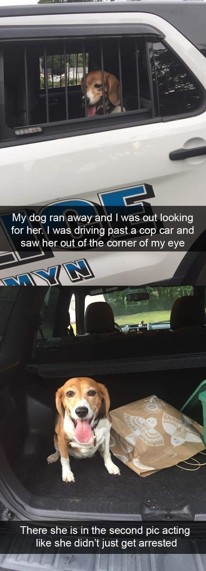 Vehicle door - My dog ran away and I was out looking for her. I was driving past a cop car and saw her out of the corner of my eye NA There she is in the second pic acting like she didn't just get arrested
