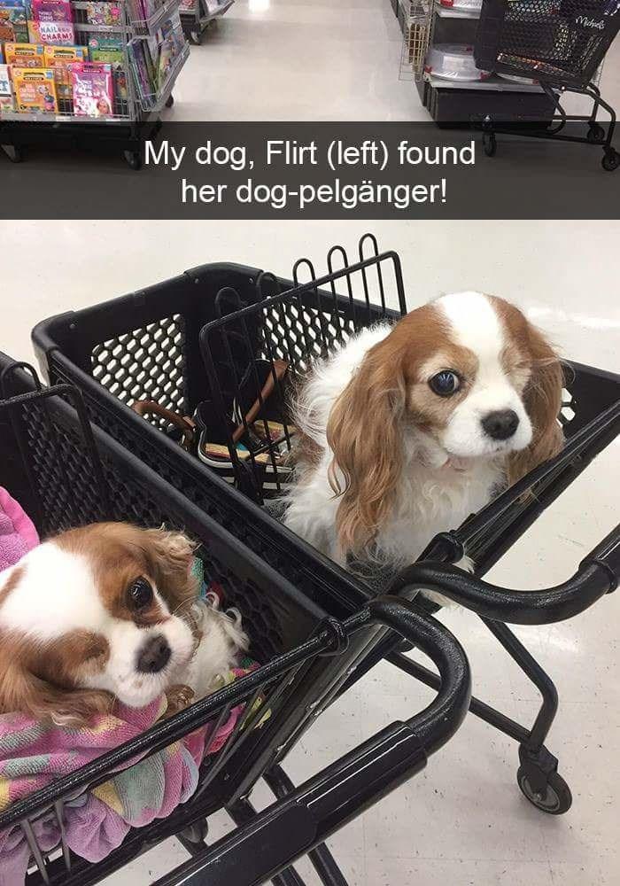 Dog - CHARM My dog, Flirt (left) found her dog-pelgänger! INCEEERP