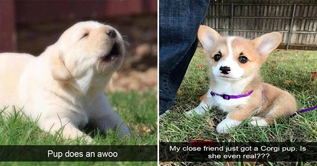 dog snapchat cute aww