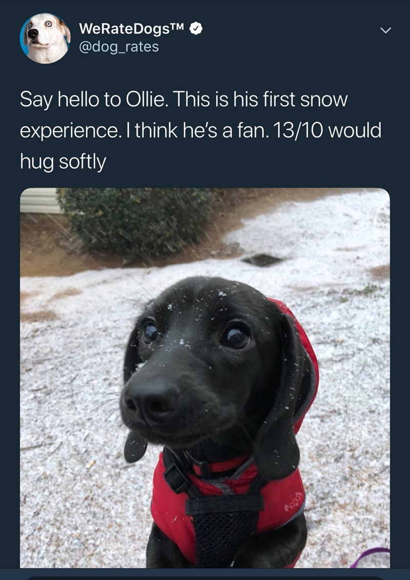 Dog - WeRateDogsTM @dog_rates Say hello to Ollie. This is his first snow experience. I think he's a fan. 13/10 would hug softly OTO