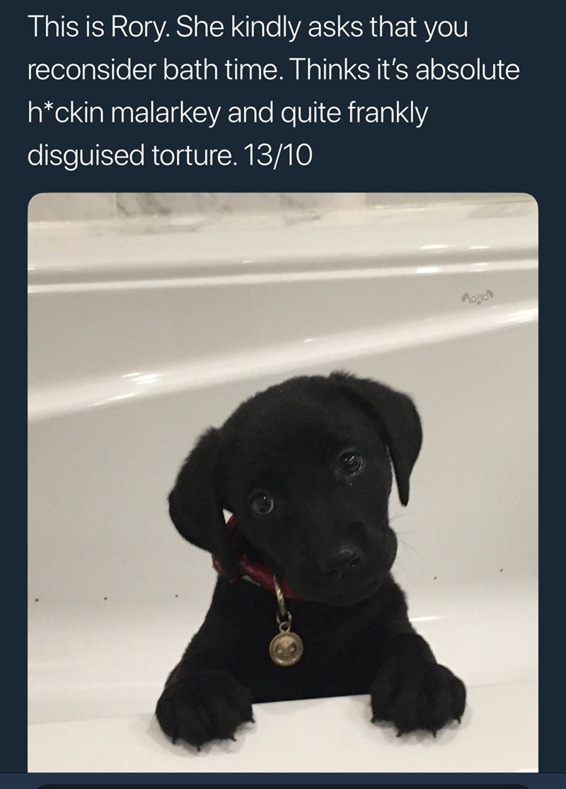 Dog - This is Rory. She kindly asks that you reconsider bath time. Thinks it's absolute h*ckin malarkey and quite frankly disguised torture. 13/10