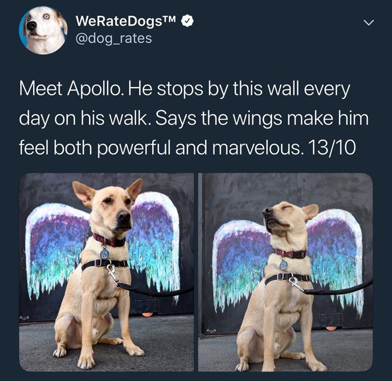 Dog - WeRateDogsTM @dog_rates Meet Apollo. He stops by this wall every day on his walk. Says the wings make him feel both powerful and marvelous. 13/10