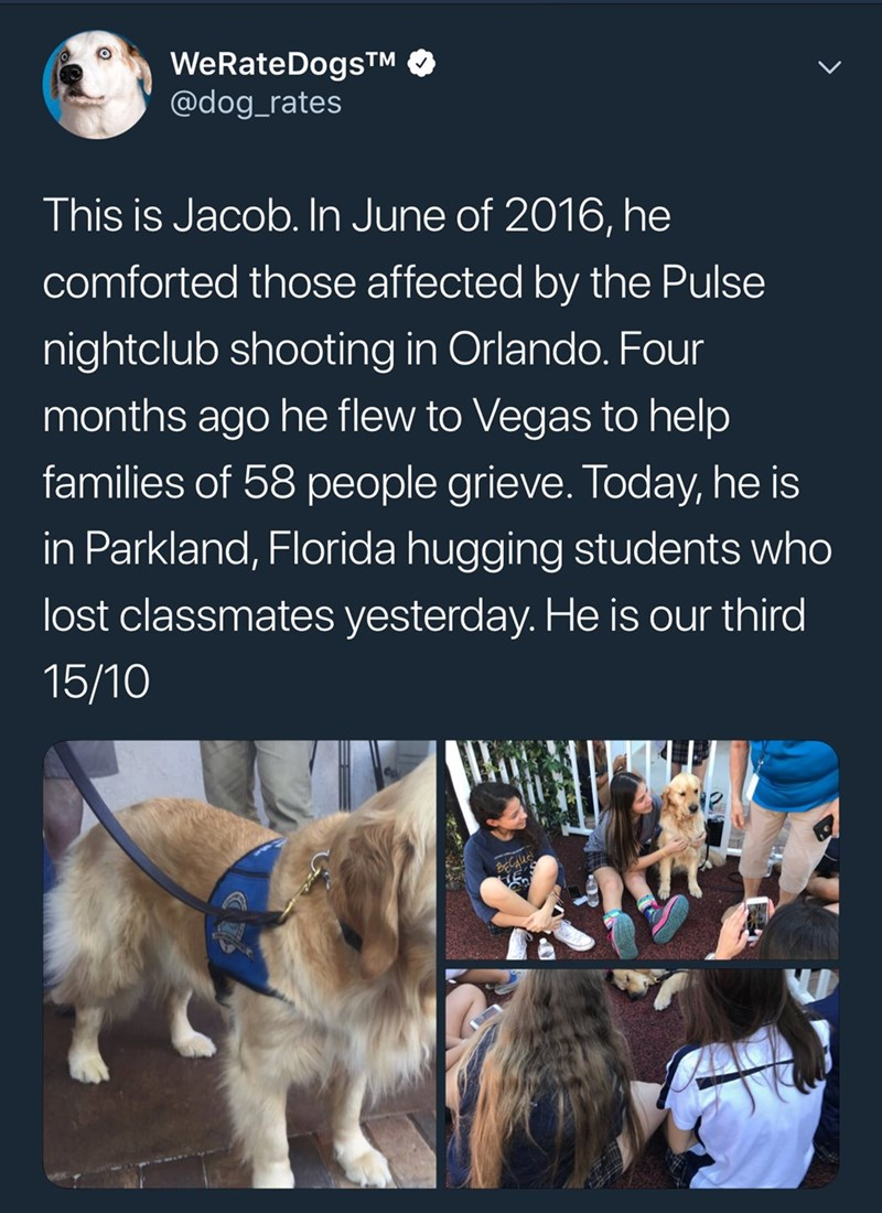Text - WeRateDogsTM @dog_rates This is Jacob. In June of 2016, he comforted those affected by the Pulse nightclub shooting in Orlando. Four months ago he flew to Vegas to help families of 58 people grieve. Today, he is in Parkland, Florida hugging students who lost classmates yesterday. He is our third 15/10