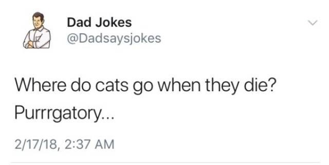 Text - Dad Jokes @Dadsaysjokes Where do cats go when they die? Purrrgatory.. 2/17/18, 2:37 AM