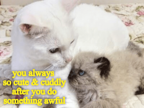cat meme - Cat - you always so cute & cuddly after you do something awful
