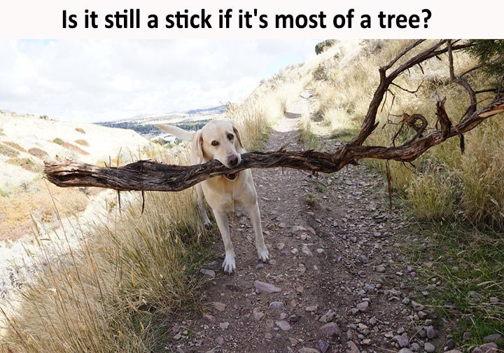 dog meme about a dog carrying a large branch