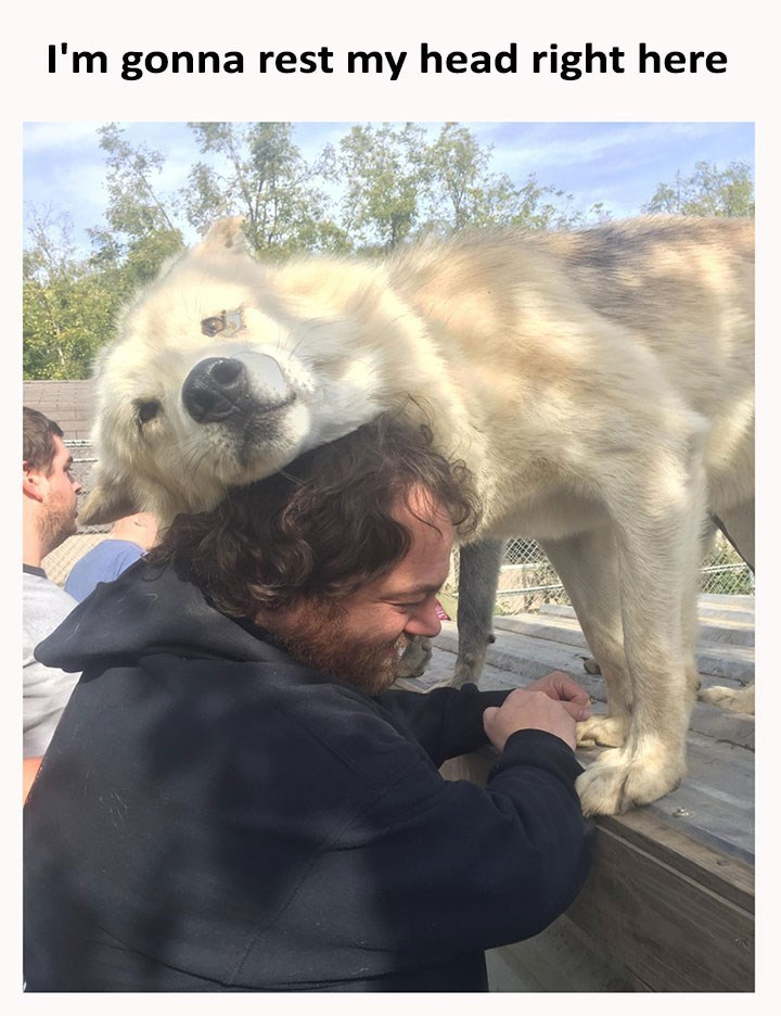 dog meme of a dog that is resting its head on a persons head