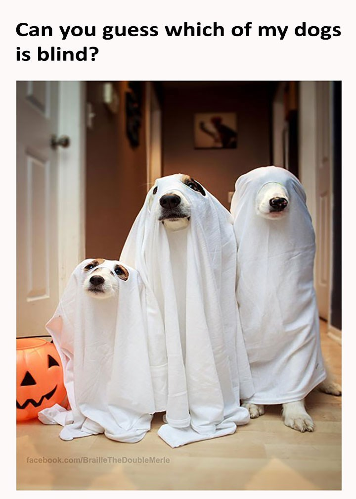 dog meme of three dogs wearing a ghost costume and one of them are blind
