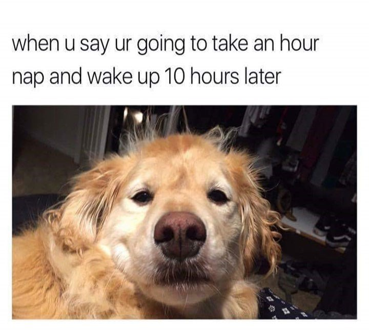 dog meme about waking up after a nap that was longer than expected