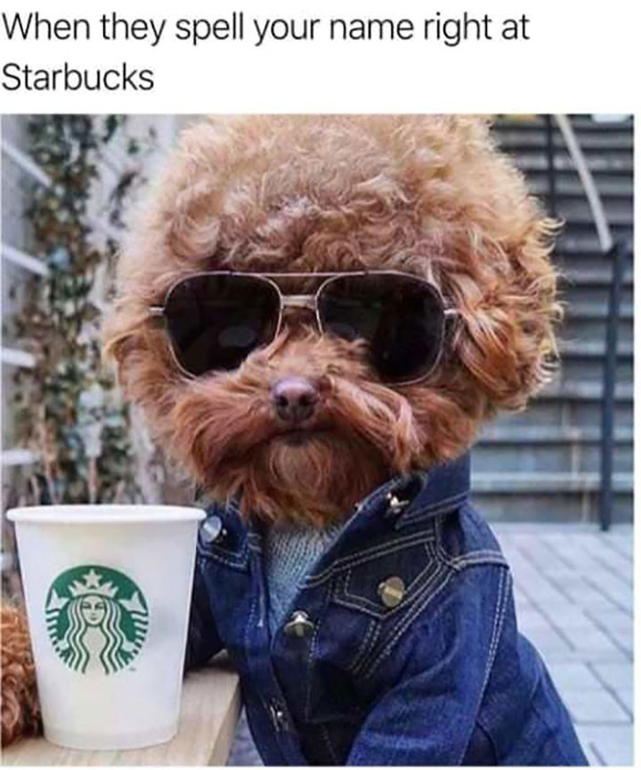 Dog meme of a dog wearing sunglasses and drinking starbucks