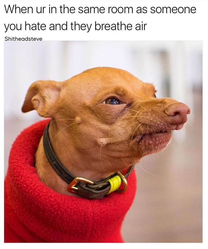 dog meme about being in the same room as someone you don't like