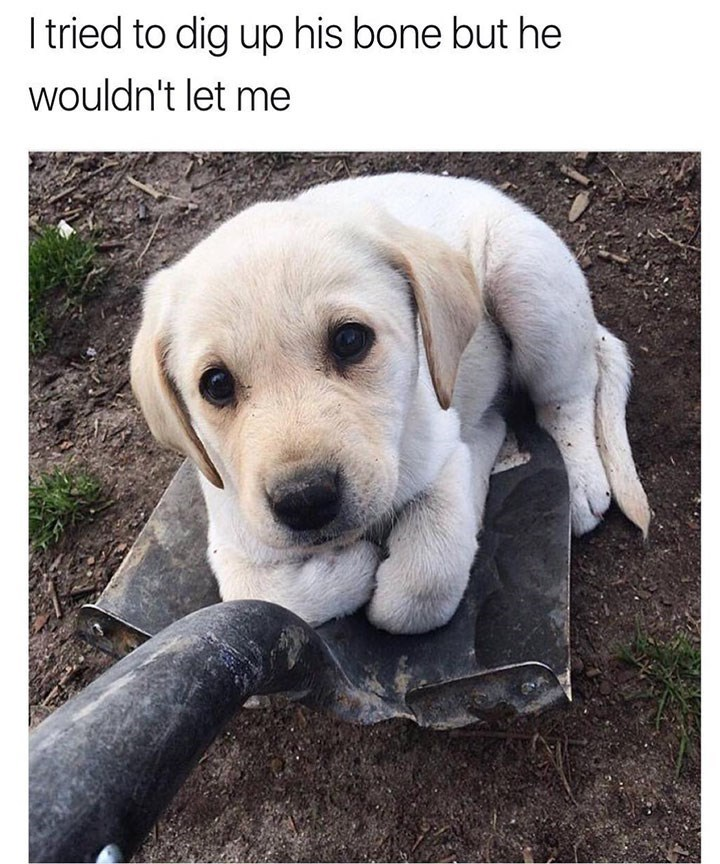dog meme of a dog sitting on a shovel because he doesn't want his owner to dig the bone up