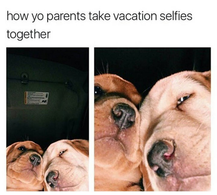 dog meme of two dogs that look like parents taking a selfie together
