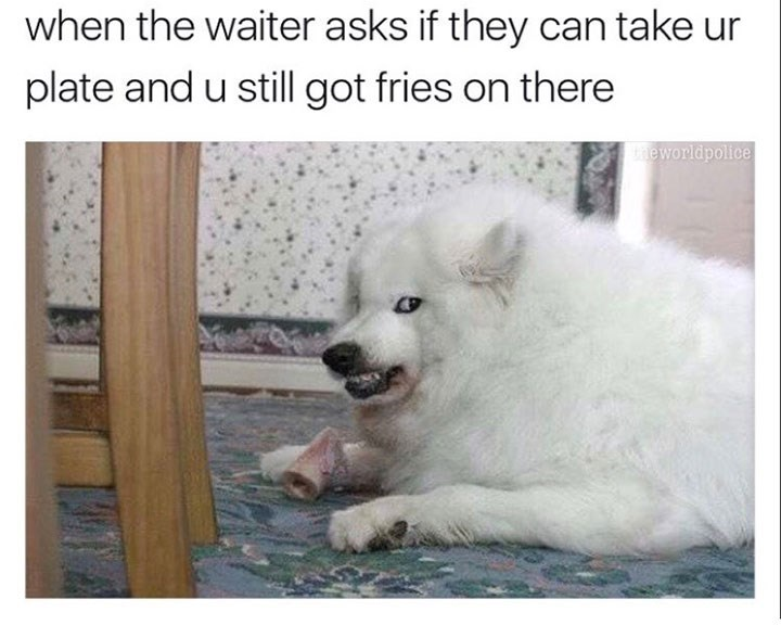 dog meme of a dog that looks angry and when your waiter wants to take your plate before you finished
