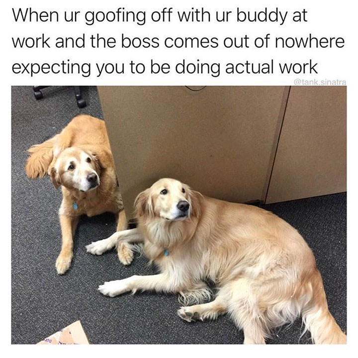 dog meme of two dogs looking guilty and when your boss catches you and your buddy goofing around
