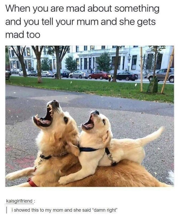 Funny Dog Meme - Dog Meme of two dogs opening their mouths together and when you and your mom get mad about the same thing