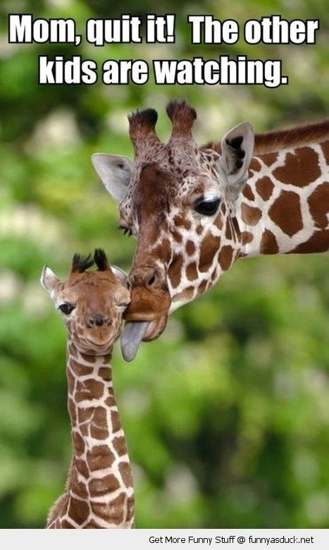Giraffe - Mom, quitit! The other kids are watching. Get More Funny Stuff @ funnyasduck.net
