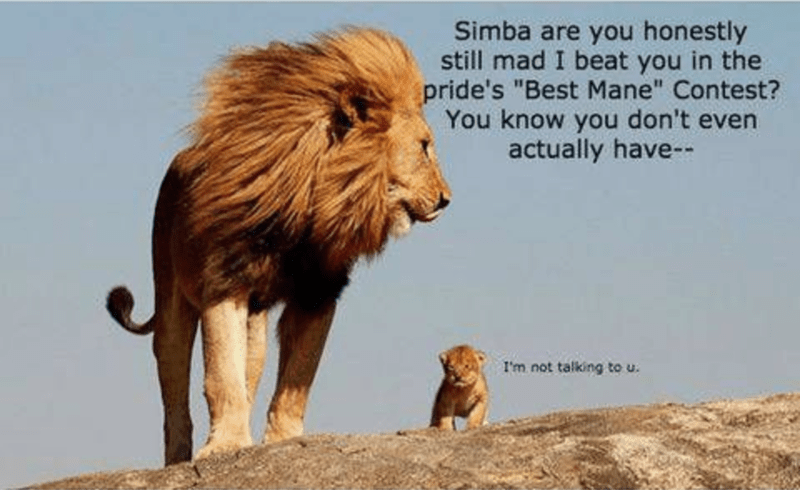 "Vertebrate - Simba are you honestly still mad I beat you in the pride's ""Best Mane"" Contest? You know you don't even actually have- I'm not talking to u"